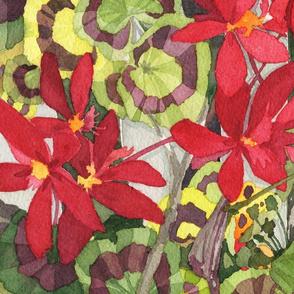 Red Geraniums in Alameda