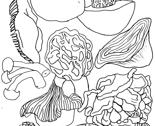 Rrrrrshrooms-vertical-1-001_thumb