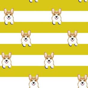 corgi stripes - yellow, dog, dogs, pet, pets, corgis, corgi fabric
