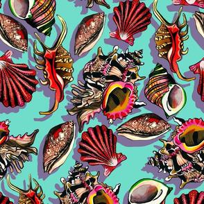 pale sea-shells