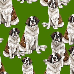 Saint Bernard on Green