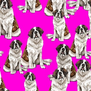 Saint Bernard on Pink