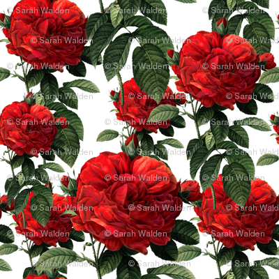 Redoute' Roses ~ Riot of Red ~ Small