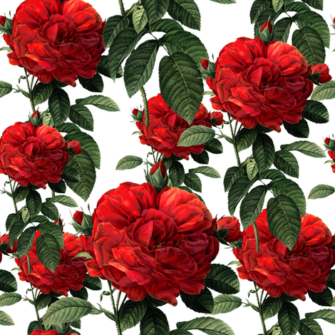 Redoute' Roses ~ Riot of Red ~ Small fabric by peacoquettedesigns on Spoonflower - custom fabric