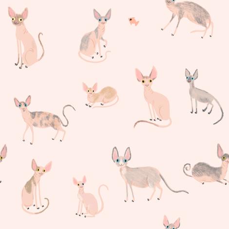 Sphynx Cats fabric by sophiecorrigan on Spoonflower - custom fabric
