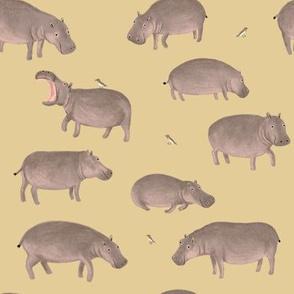 Hippos & Tickbirds