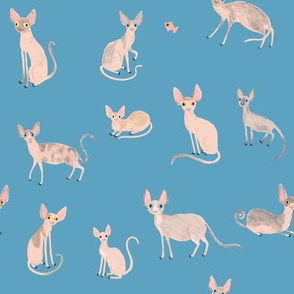 Sphynx Cats - Blue