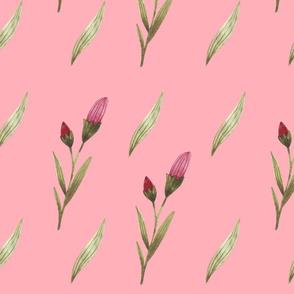 Buds of petunia