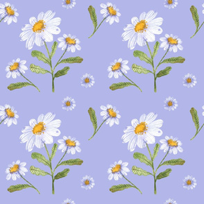 Wildflowers of camomile