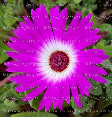 Purple Flowers in Alaska