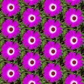 Rrpurple-flower-29-july-2018_shop_thumb