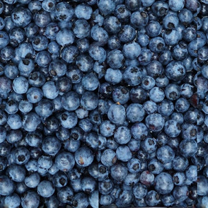 Blueberries from Maine --BIG