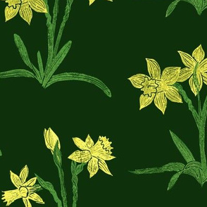 sunny yellow daffodils on dark green