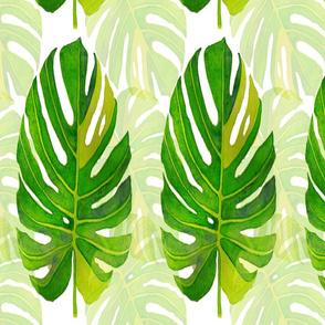 Watercolor monstera leaves 17