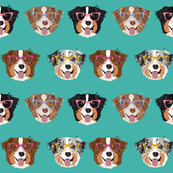 australian shepherds glasses fabric - cute dogs and glasses design - turq