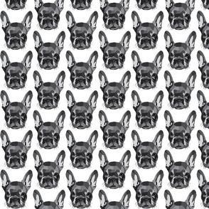 French Bulldog - grey