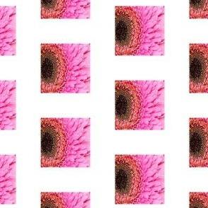 PH_155-B Pink Flower