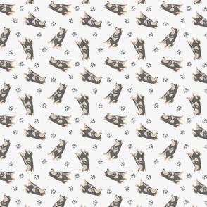 Tiny black and tan Shiba Inu - gray