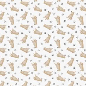 Tiny cream Shiba Inu - gray