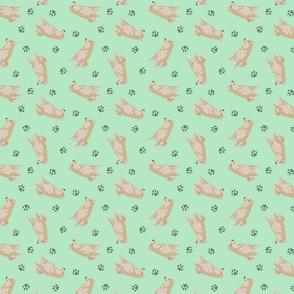 Tiny cream Shiba Inu - green