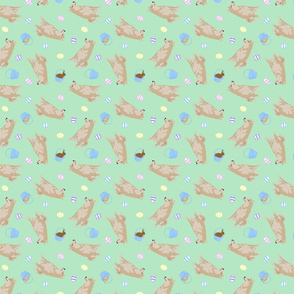 Tiny cream Shiba Inu - Easter