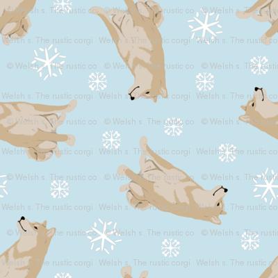 Tiny cream Shiba Inu - winter snowflakes