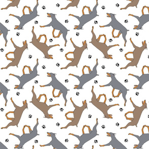 Trotting dilute Doberman Pinschers and paw prints - white
