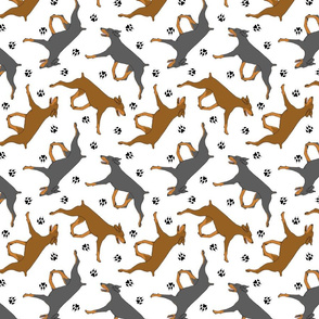 Trotting uncropped Doberman Pinschers and paw prints - white