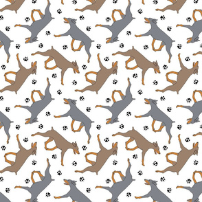 Trotting uncropped dilute Doberman Pinschers and paw prints - white