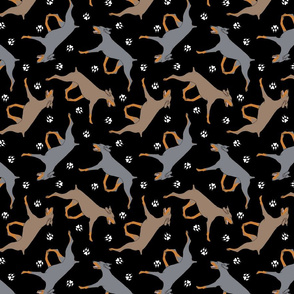 Trotting uncropped dilute Doberman Pinschers and paw prints - black