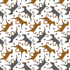 Trotting natural Doberman Pinschers and paw prints - white