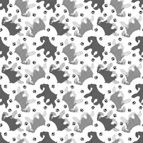 Trotting uncropped Miniature Schnauzers and paw prints - white
