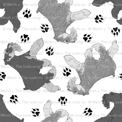 Trotting uncropped Miniature Schnauzers and paw prints - tiny white