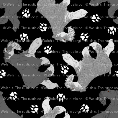 Trotting uncropped Miniature Schnauzers and paw prints - black