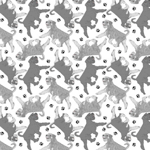 Trotting natural Standard Schnauzers and paw prints - white