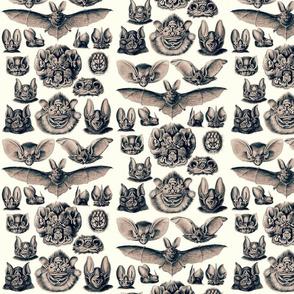 Ernst Haeckel Bats Dusk