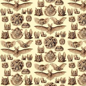 Ernst Haeckel Bats Fire Light