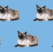 Siamese cat pattern