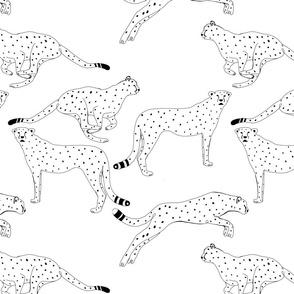 black and white cheetahs