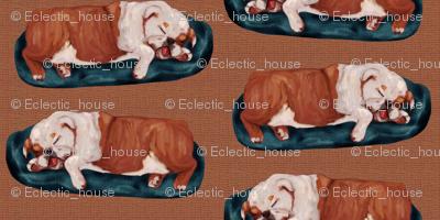 English Bulldog Napping