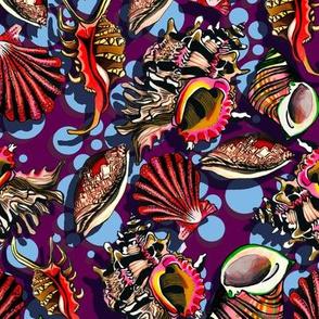 spotty purple shells