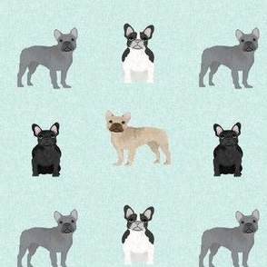french bulldogs - aqua - dog, dogs, dog breeds, pet pets