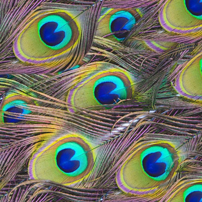 Peacock Feathers Pattern from a Photo