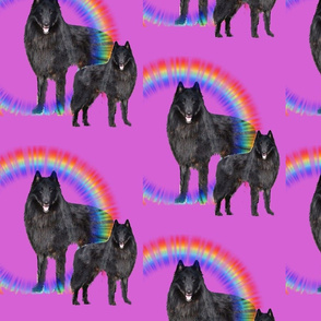 belgian sheepdog  rainbows