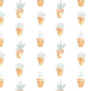 Succulents & Pots