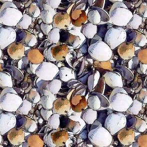 clam shells-smaller