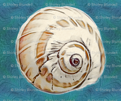 shell on teal blue background