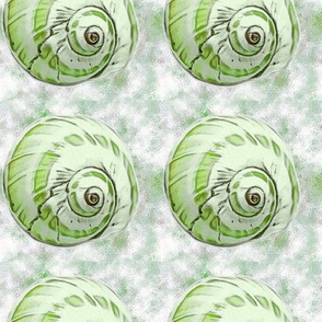 Green shell on green background