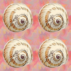 shell on colored background tif