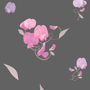 Pink and Lavender Sweet Peas on Grey